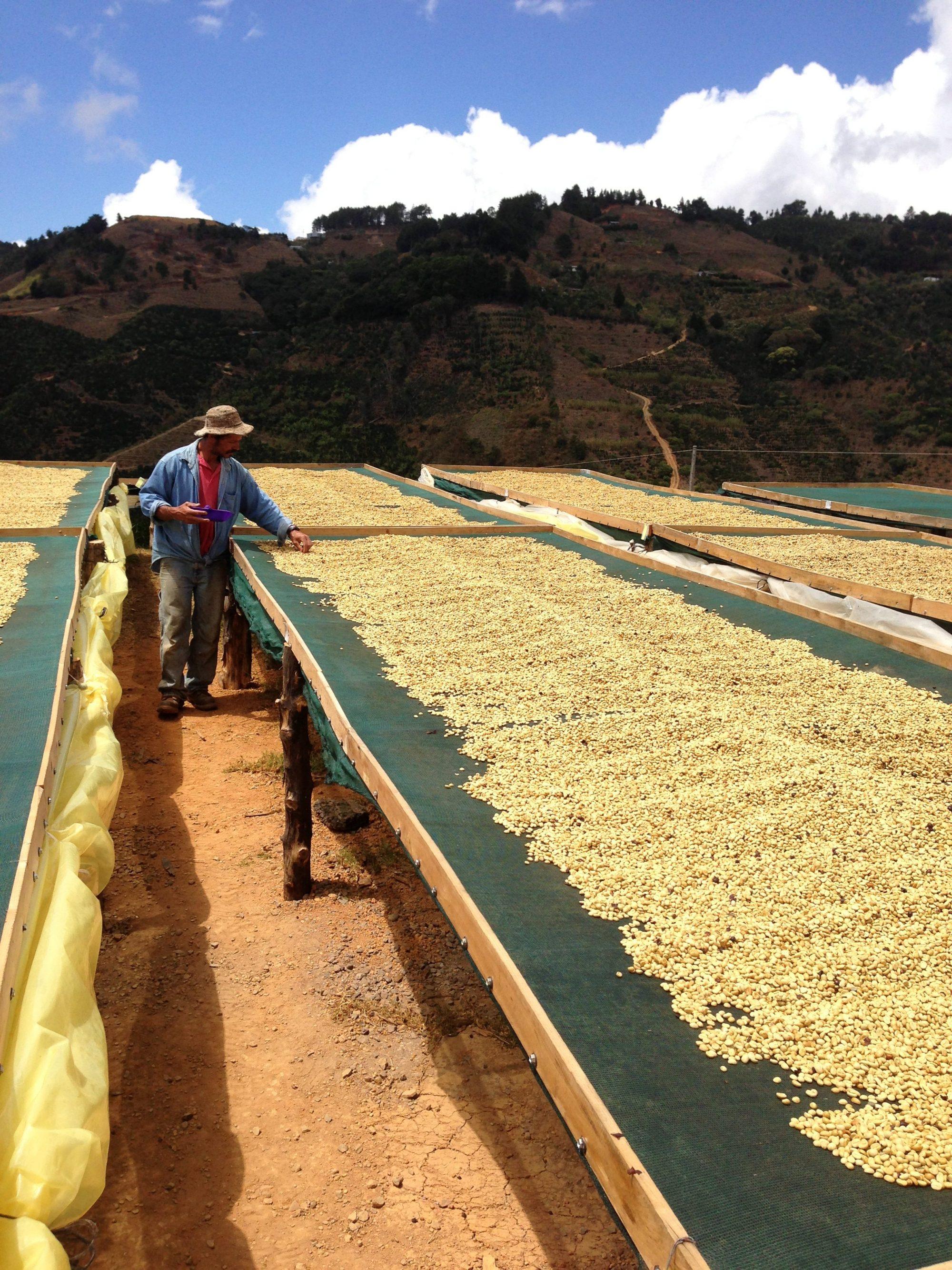 Plowshares Coffee Roasters